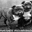 olde bulldogee.jpg