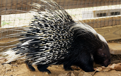 Porcupine Exotic Game Park
