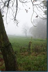 2011-11-28 Wildwood 007