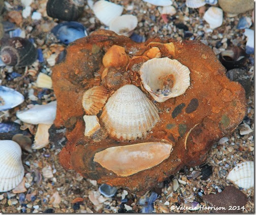 13-shell-face