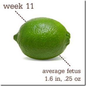 11 weeks lime
