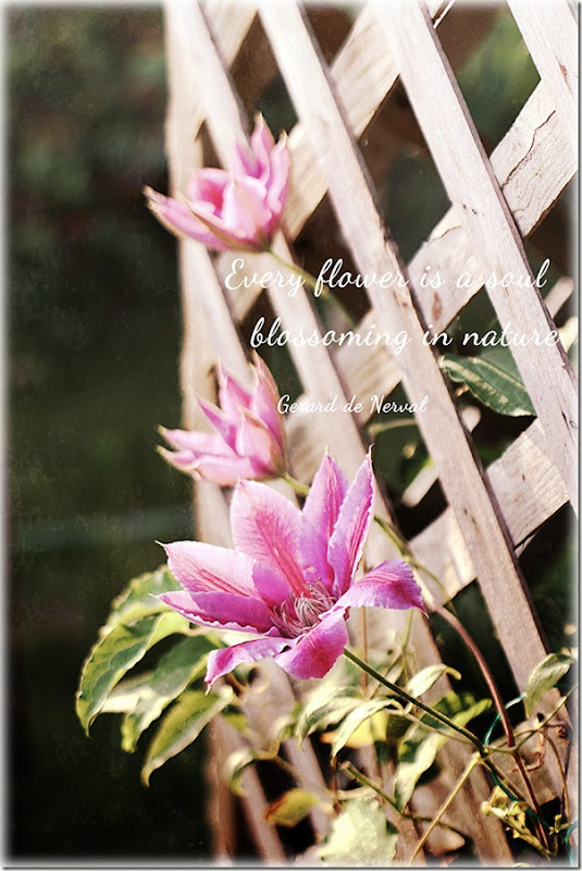 three-clematis-with-textures-for-web