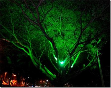 rvore iluminada