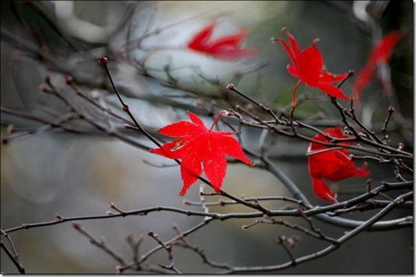 Lindas imagens de folhas do outono (14)