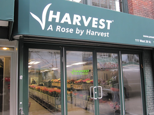 Another stop was made at A Rose By Harvest -- they just recently opened their store this month!