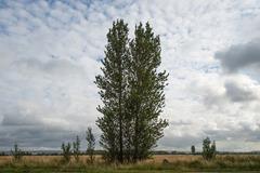 130804 Bognor trees 142 ecopy