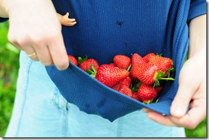 Strawberry Picking & Marcus band 078