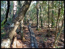 Florida Trail Hike 3