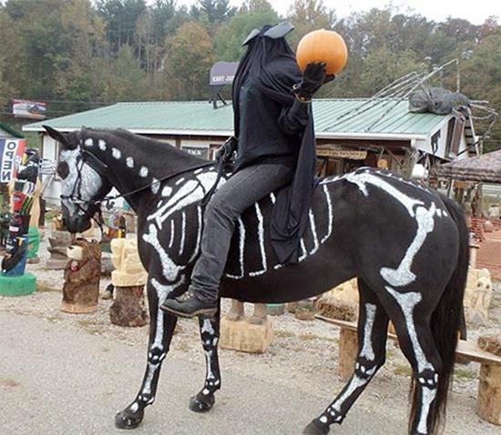 Cavalo esqueleto 02