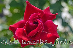 6  - Glória Ishizaka - Rosas do Jardim Botânico Nagai - Osaka