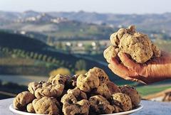 tartufo bianco, Alba, Langhe, Roero, Monferrato