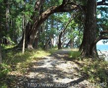 Newcastle Island path 2 - SK