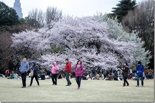 Stemingsbillede fra forår i Tokyo, marts 2013