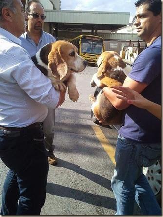 tripoli-beagle