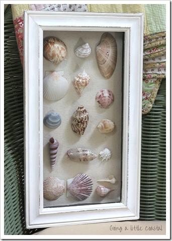 framed shells in shadow box