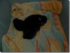 kittens day 1-3  06