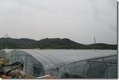 Korea set 10 054