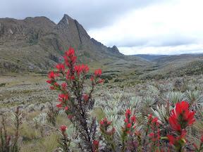 Colombia, Páramos: Sumapaz, Pico del Águila