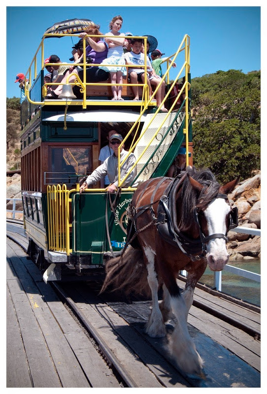 victor-harbor-horse-trams-12