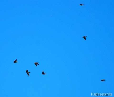 6. flying-kab
