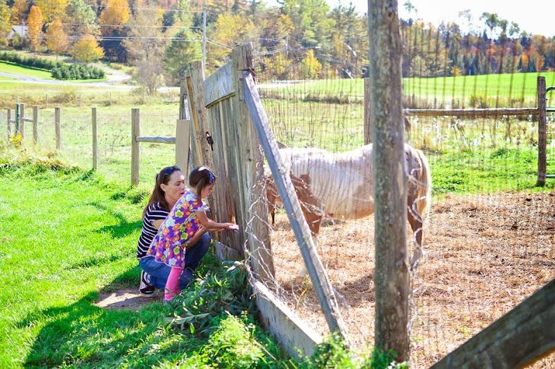 bragg farm-9282