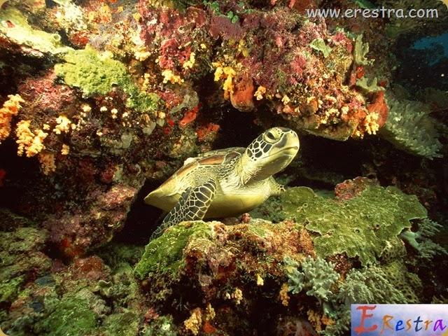 Underwater Wallpaper (141)