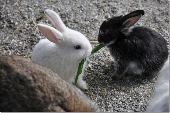cute-funny-animals-41