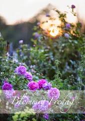 blommigfredag2014