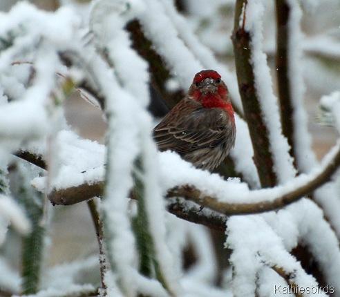 11. HOFI in snow-kab