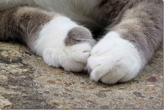 Kitty_Paws