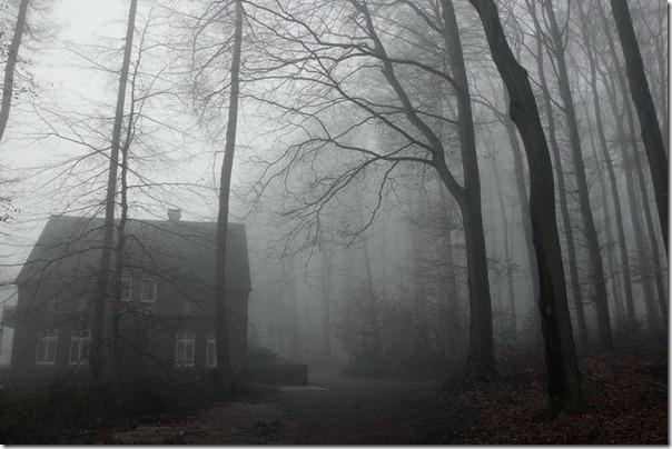 Florestas sombrias (3)