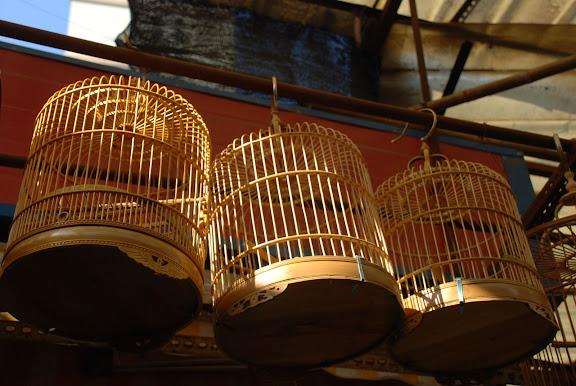 Shanghai - Pets market - cages au soleil