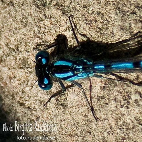 macro_20110611_dragonfly2a