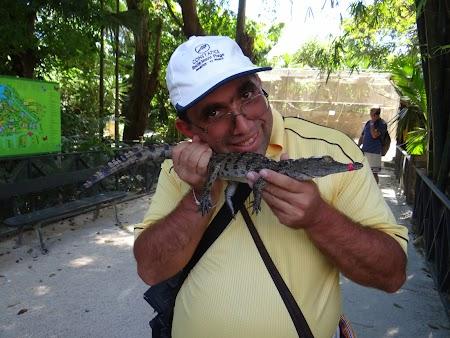 Obiective turistice Mauritius: mangaind un crocodil