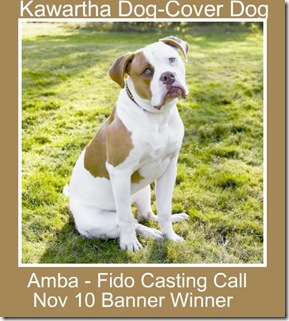image Amba Fido Casting Call Entry Banner Winner