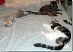 Pebbles, Prime,Precious taking a nap.