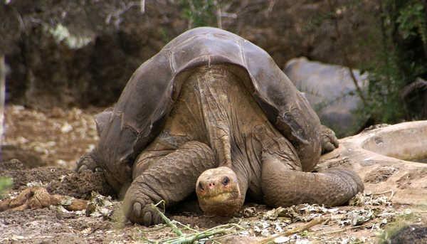 10- Tartaruga-das-galápagos