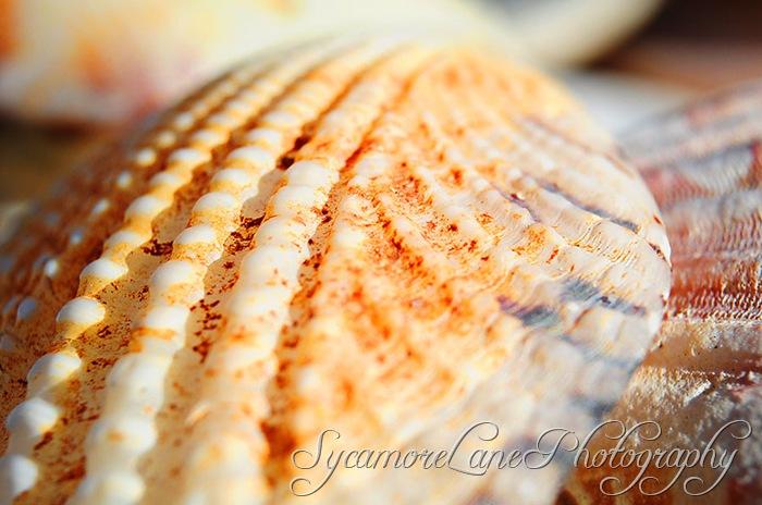 shell-w