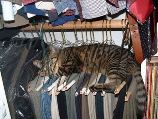gatos durmiendo (5)