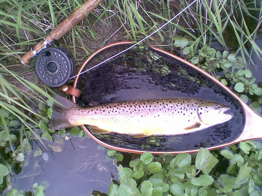 Richard&#39;s mayfly Trout