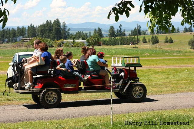 Starwberry picking golf cart