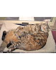 Chester and Winnie, a tabby Bengal and torbie from Eagan, Minnesota, love to sleep together.