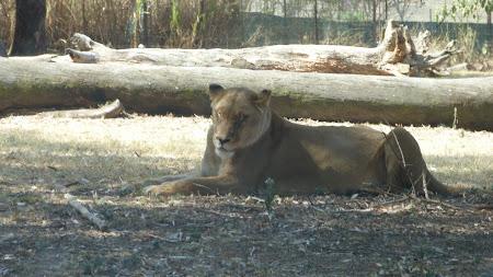 Leoaica in Johannesburg