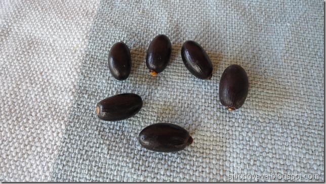 Sementes da castanhola