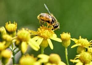 Amazing Pictures of Animals, Photo, Nature, Incredibel, Funny, Zoo, Bee, Insetcs, Anthophila, Alex (8)