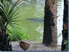 7819 Courtenay Parkway (State Road 3), Merritt Island Wildlife Refuge, Florida - Manatee Observation Deck - Manatee