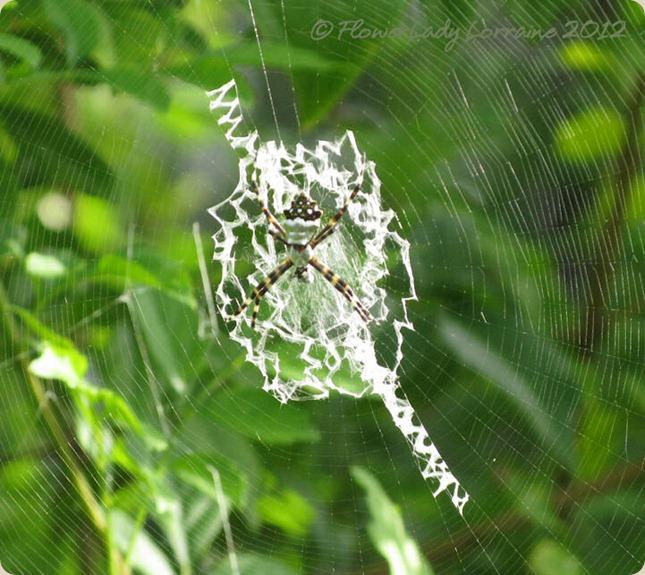 08-23-spider