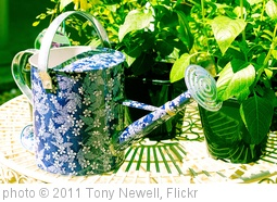 'Decorative watering can' photo (c) 2011, Tony Newell - license: http://creativecommons.org/licenses/by/2.0/