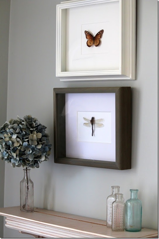 dragonbutterfly