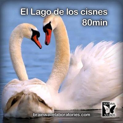 El Lago de los cisnes - 80min